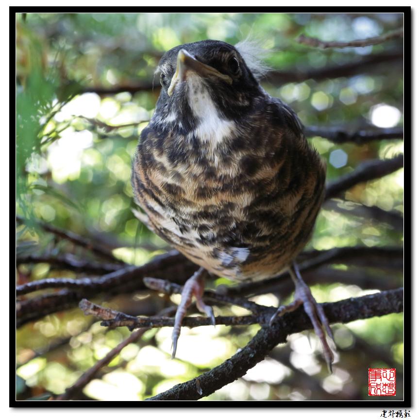 【心想事成】最后的一只小鸟_图1-13