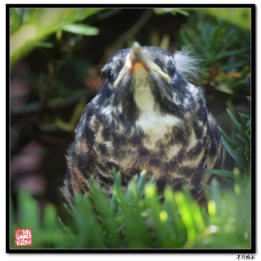 【心想事成】最后的一只小鸟_图1-18