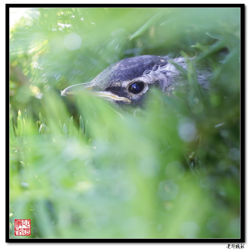 【心想事成】最后的一只小鸟_图1-19