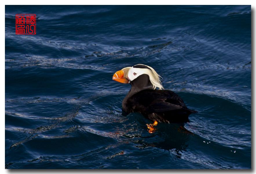《原创摄影》:舟行Kenai峡湾国家公园:梦中的阿拉斯加之二十一 ..._图1-1