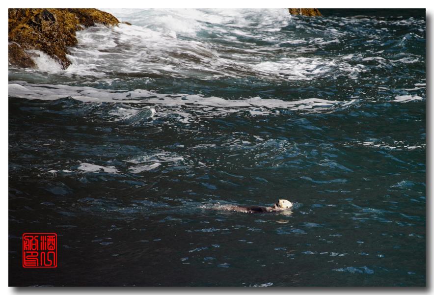 《原创摄影》:舟行Kenai峡湾国家公园:梦中的阿拉斯加之二十一 ..._图1-38