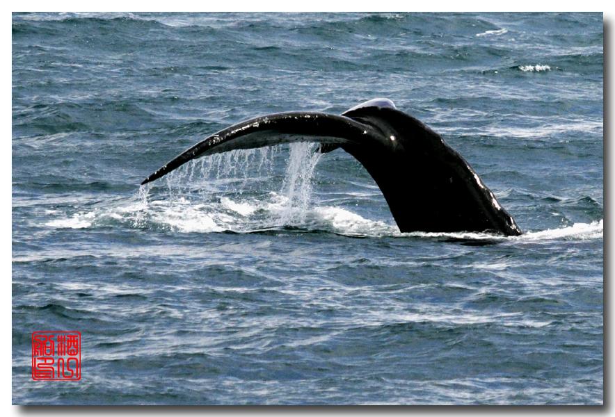 《原创摄影》:舟行Kenai峡湾国家公园:梦中的阿拉斯加之二十一 ..._图1-40