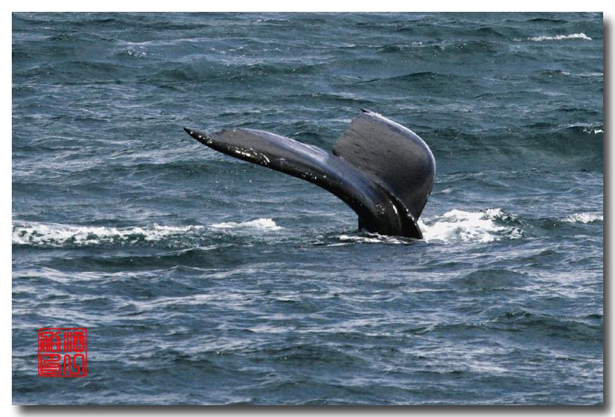 《原创摄影》:舟行Kenai峡湾国家公园:梦中的阿拉斯加之二十一 ..._图1-41