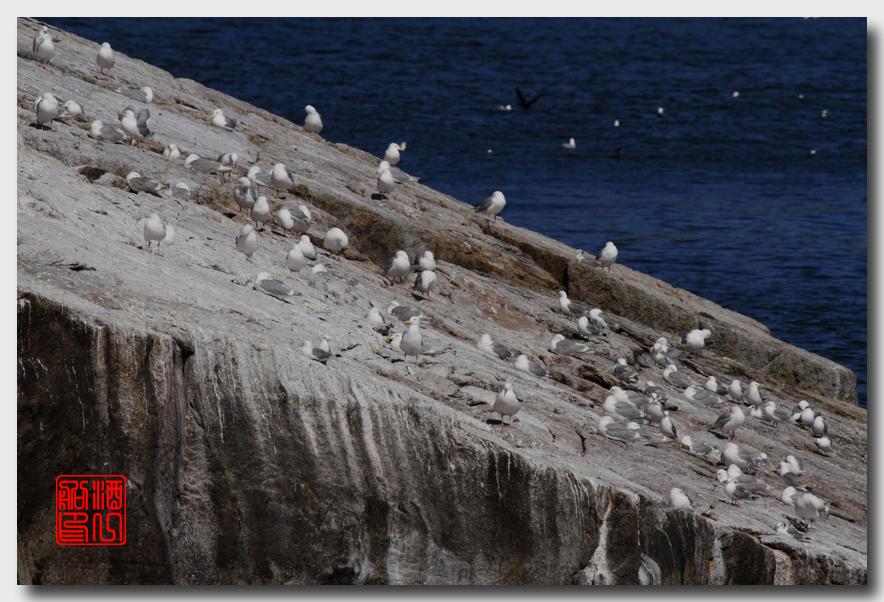 《原创摄影》:舟行Kenai峡湾国家公园:梦中的阿拉斯加之二十一 ..._图1-43