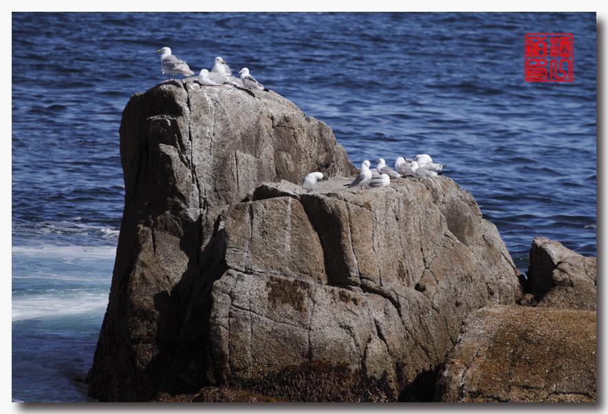 《原创摄影》:舟行Kenai峡湾国家公园:梦中的阿拉斯加之二十一 ..._图1-44