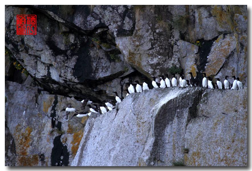 《原创摄影》:舟行Kenai峡湾国家公园:梦中的阿拉斯加之二十一 ..._图1-45