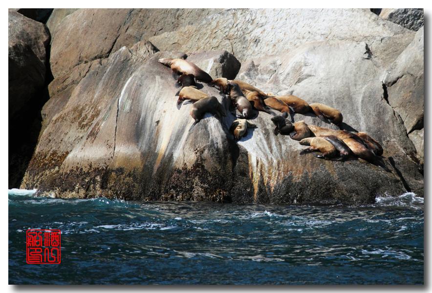 《原创摄影》:舟行Kenai峡湾国家公园:梦中的阿拉斯加之二十一 ..._图1-47