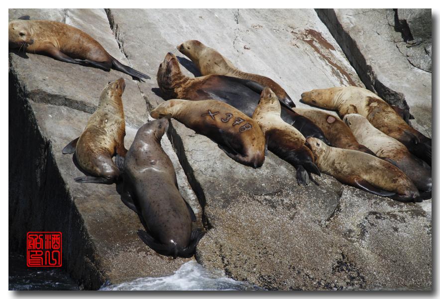 《原创摄影》:舟行Kenai峡湾国家公园:梦中的阿拉斯加之二十一 ..._图1-48