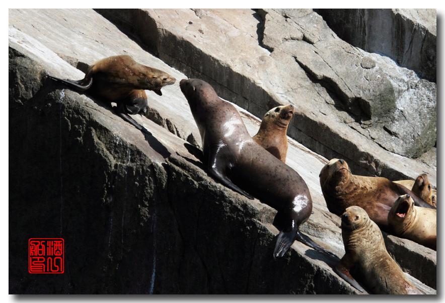 《原创摄影》:舟行Kenai峡湾国家公园:梦中的阿拉斯加之二十一 ..._图1-49