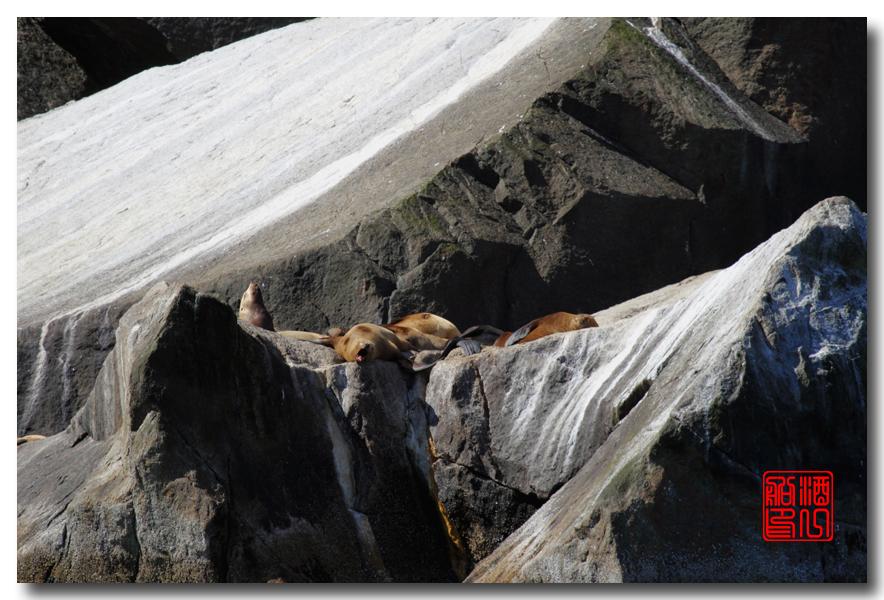 《原创摄影》:舟行Kenai峡湾国家公园:梦中的阿拉斯加之二十一 ..._图1-50