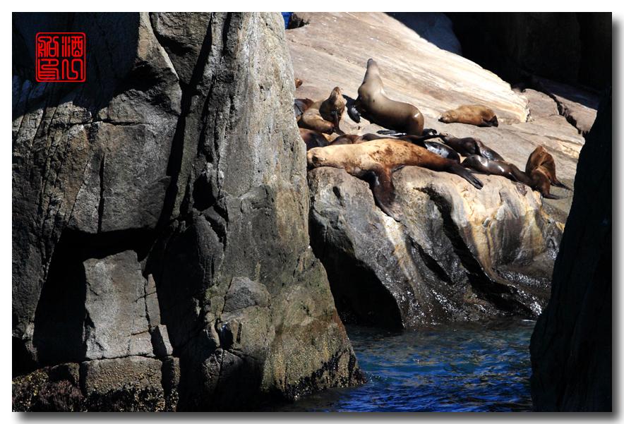 《原创摄影》:舟行Kenai峡湾国家公园:梦中的阿拉斯加之二十一 ..._图1-51