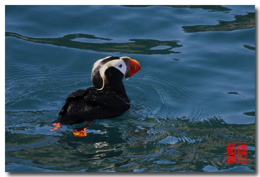 《原创摄影》:舟行Kenai峡湾国家公园:梦中的阿拉斯加之二十一 ..._图1-52