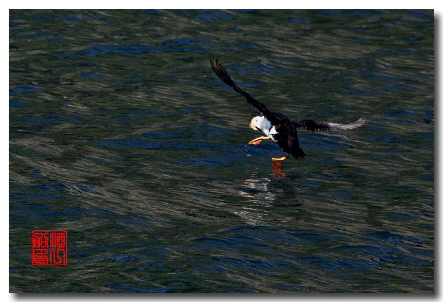 《原创摄影》:舟行Kenai峡湾国家公园:梦中的阿拉斯加之二十一 ..._图1-53