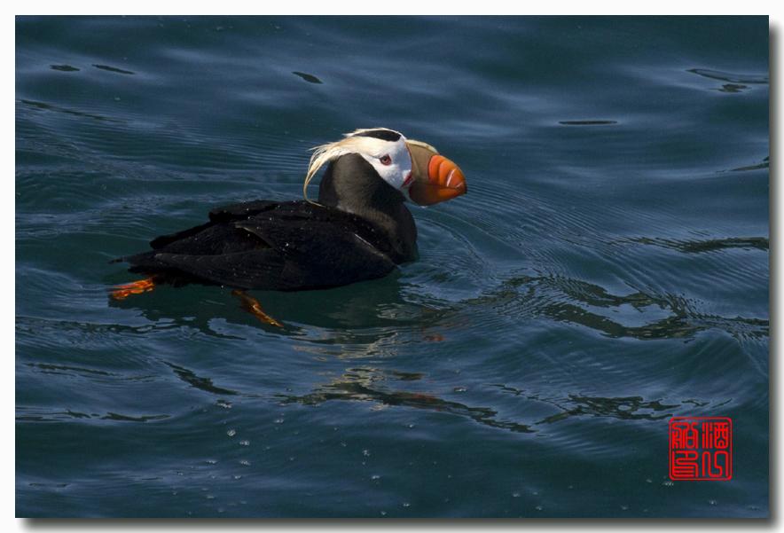 《原创摄影》:舟行Kenai峡湾国家公园:梦中的阿拉斯加之二十一 ..._图1-54