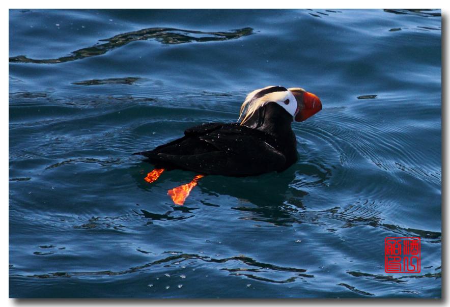 《原创摄影》:舟行Kenai峡湾国家公园:梦中的阿拉斯加之二十一 ..._图1-56