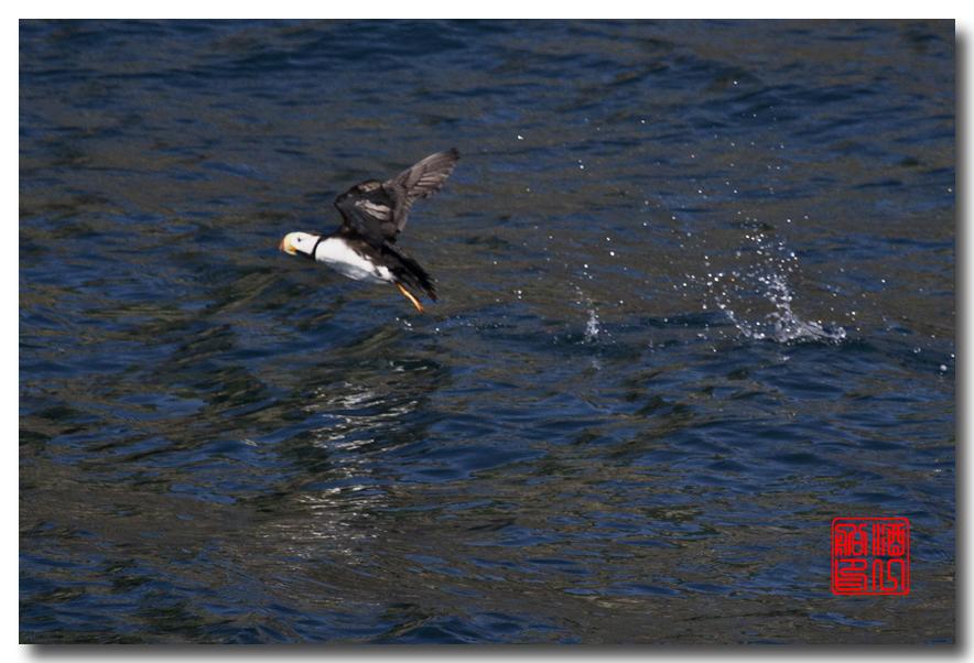 《原创摄影》:舟行Kenai峡湾国家公园:梦中的阿拉斯加之二十一 ..._图1-57