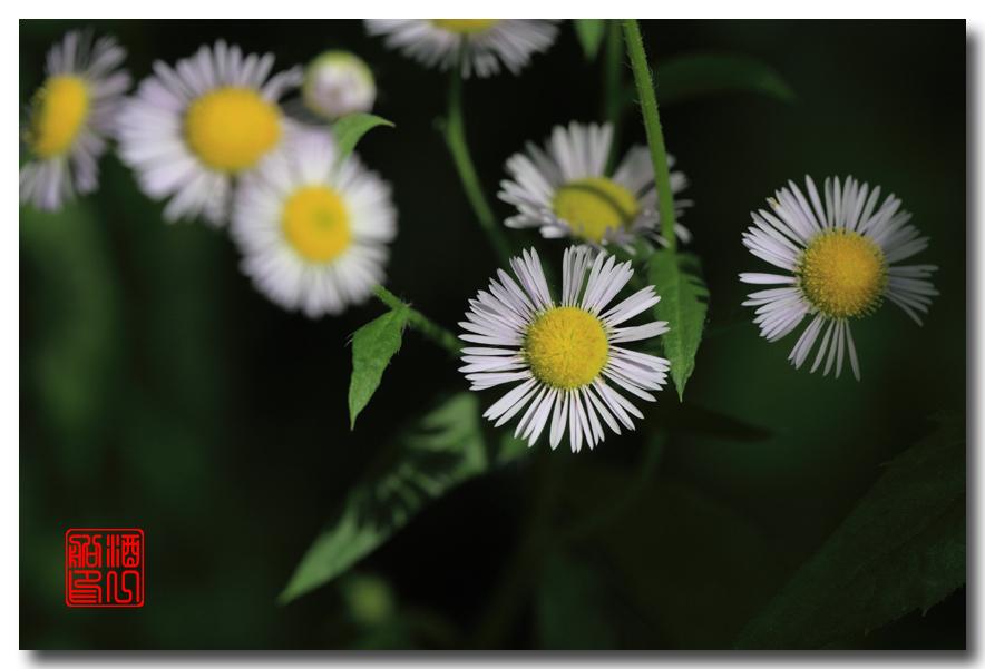 《原创摄影》:路边的野花採不採?_图1-13