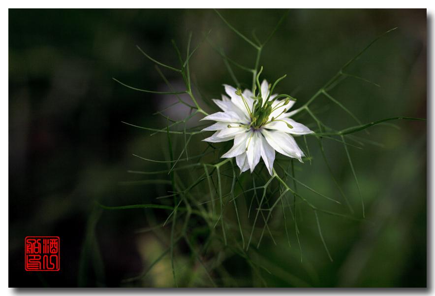 《原创摄影》:路边的野花採不採?_图1-3