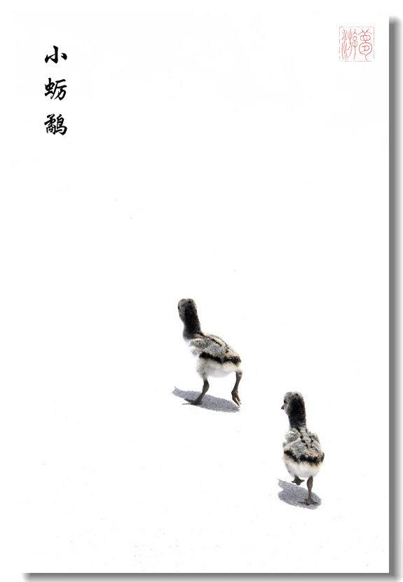 〖梦游摄影〗小蛎鹬18P_图1-1