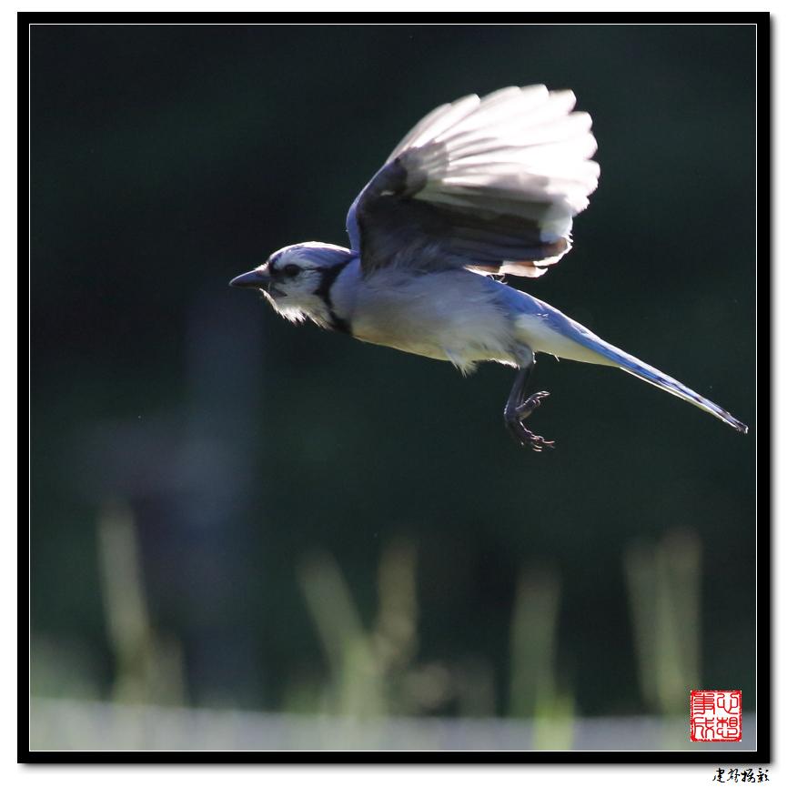 【心想事成】打鸟记_图1-22