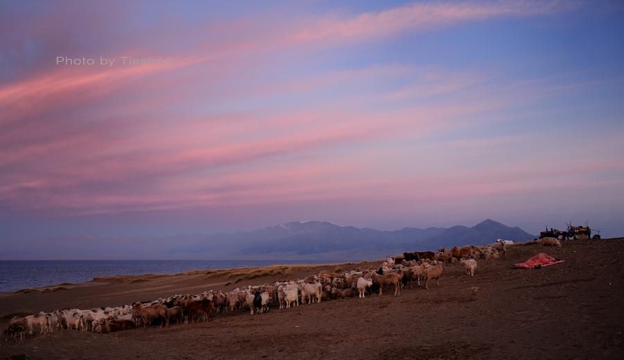 大美新疆——塞里木湖边牧羊人[原创]_图1-5