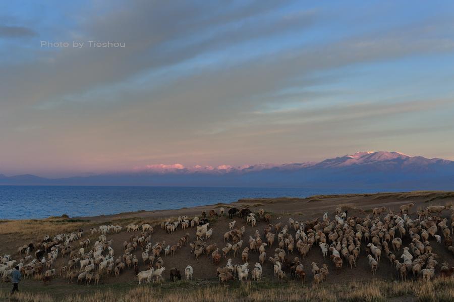 大美新疆——塞里木湖边牧羊人[原创]_图1-6
