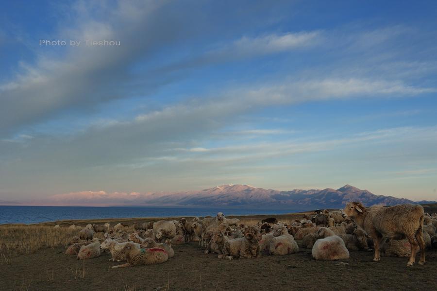 大美新疆——塞里木湖边牧羊人[原创]_图1-7