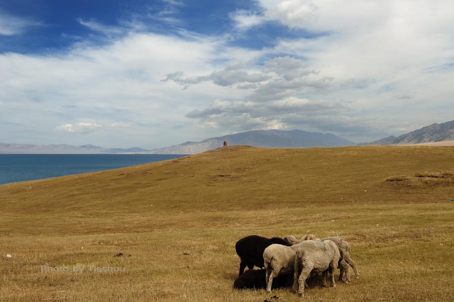 大美新疆——塞里木湖边牧羊人[原创]_图1-12