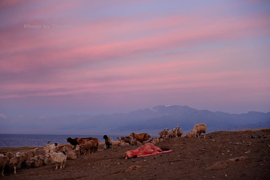 大美新疆——塞里木湖边牧羊人[原创]_图1-1