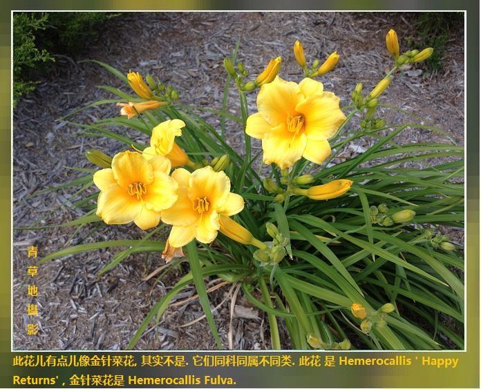 花花草草_图1-4