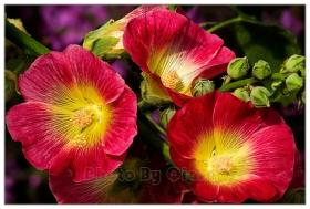 纽约植物园之花卉(2)