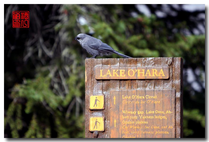 《原创摄影》:湖光山色落基行 - Lake O'Hara_图1-10
