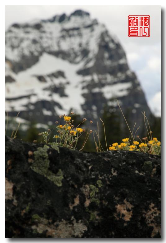 《原创摄影》:湖光山色落基行 - Lake O'Hara_图1-32