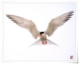 【风之影】飞翔吧,海燕