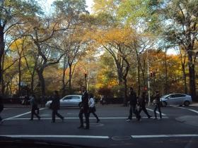中央公园的秋