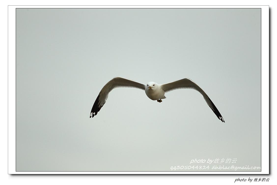 鸥在飞_图1-9