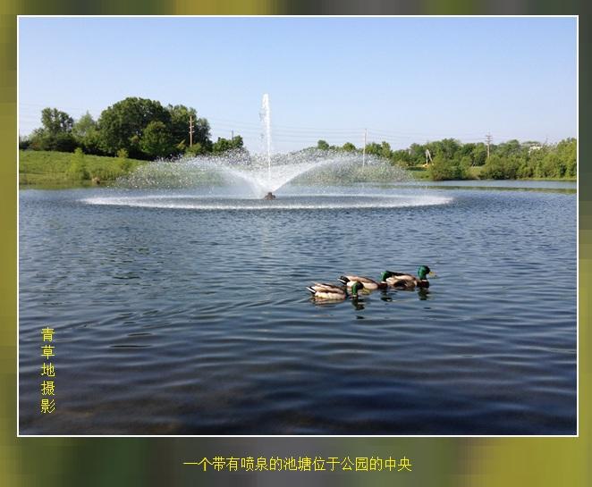 公园见闻_图1-4