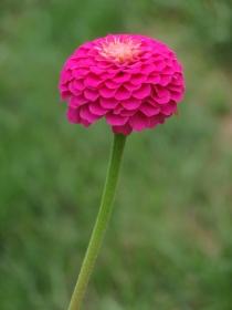 花有百日红