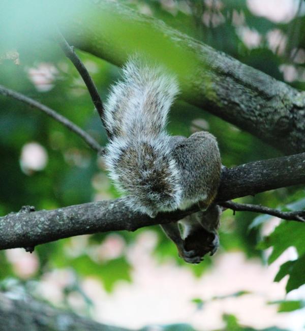 邻居squirrel 的休闲下午茶_图1-1