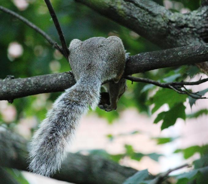 邻居squirrel 的休闲下午茶_图1-2