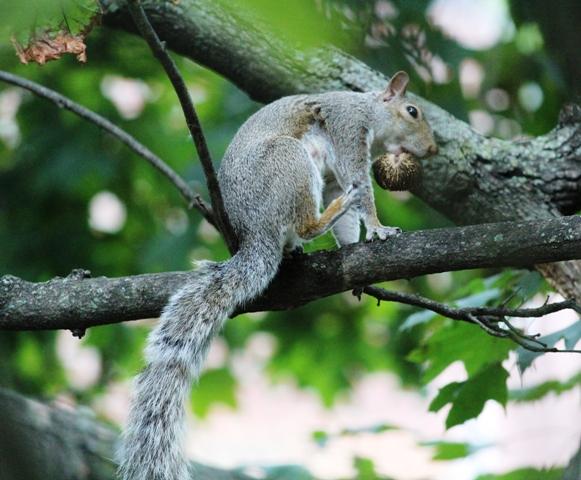 邻居squirrel 的休闲下午茶_图1-3