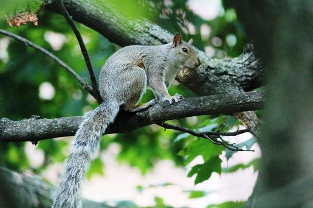邻居squirrel 的休闲下午茶_图1-4