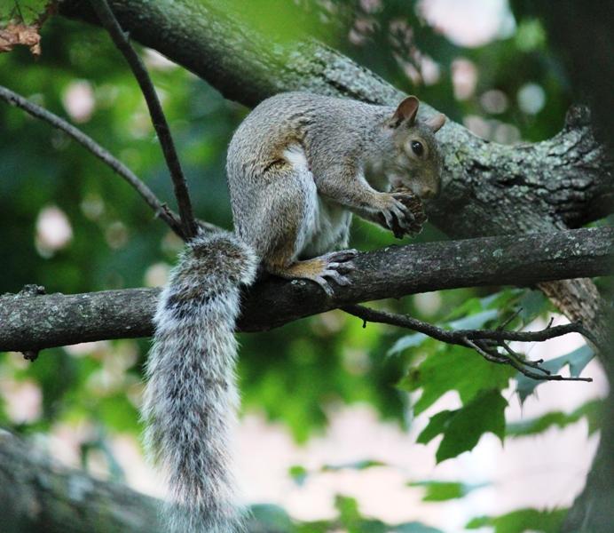 邻居squirrel 的休闲下午茶_图1-5