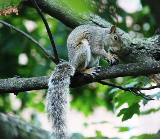 邻居squirrel 的休闲下午茶_图1-6