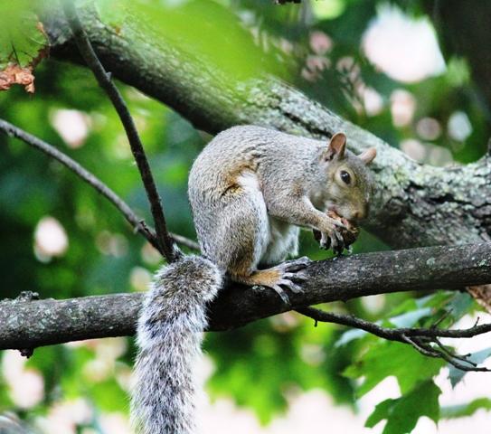 邻居squirrel 的休闲下午茶_图1-7