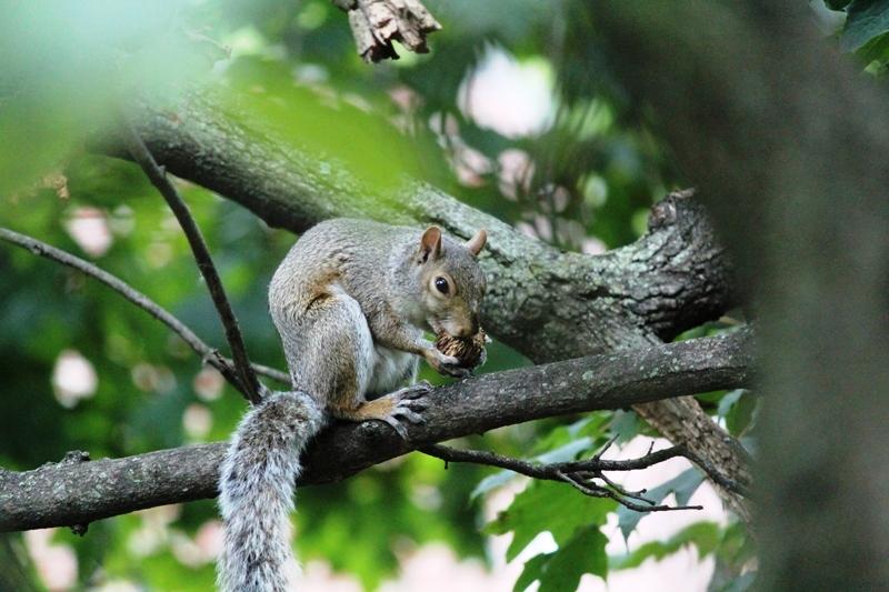 邻居squirrel 的休闲下午茶_图1-9