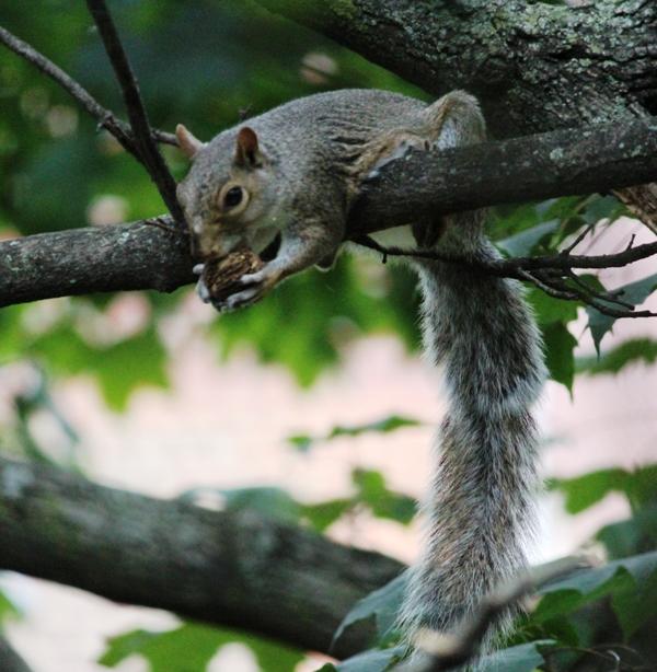 邻居squirrel 的休闲下午茶_图1-11