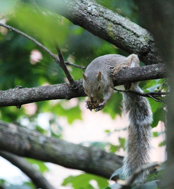 邻居squirrel 的休闲下午茶_图1-15