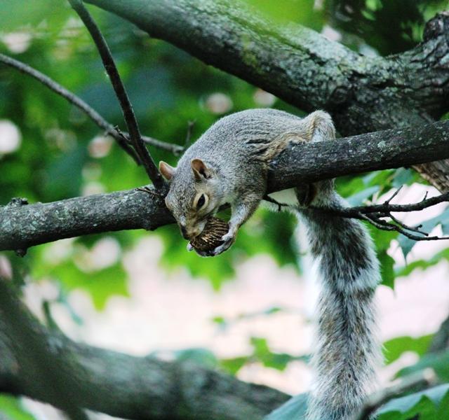邻居squirrel 的休闲下午茶_图1-13