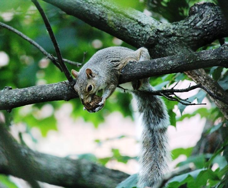 邻居squirrel 的休闲下午茶_图1-14